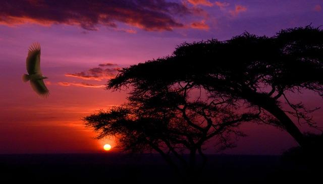 viajes de incentivo comprometidos, Africa