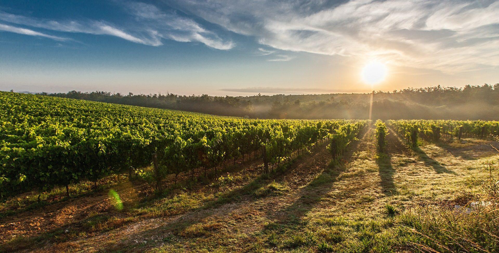 evento vinos galicia en Madrid